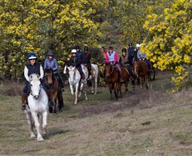 Burnelee Excursions on Horseback - Accommodation Georgetown